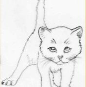 Schizza… un gattino
