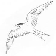 Schizza un uccello
