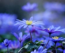 Il Maggio dei fiori