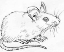Schizza un… topolino