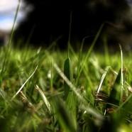 All'artista in erba